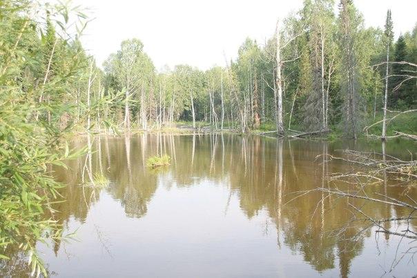 Мёртвые озёра в Сибири